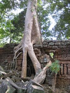 temple_tree_07