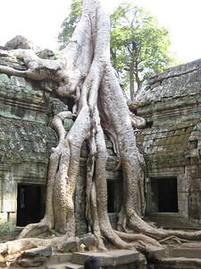 temple_tree_04