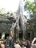 temple_tree_06