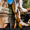 Asia - Cambodia - Prasat Angkor Wat - Largest Khmer temple complex in world - UNESCO World Heritage Site - One of the most important archaeological sites in South-East Asia stretching over some 400 km2 containing magnificent remains of the different capitals of the Khmer Empire from the 9th to the 15th century - Ta Prohm Temple Lost in Jungle  - Imposing temple that best merged with the jungle