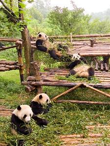 Pandas. Eating.