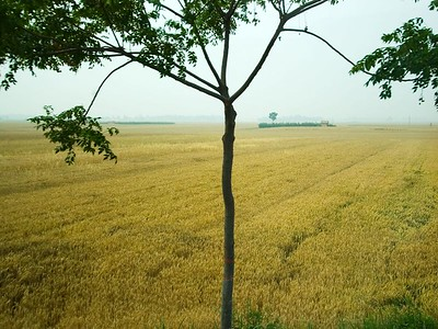 We drove through farmland from Xian to Hu Xian