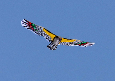 At first I thought I had spotted a real bird.but it turned out to be a kite