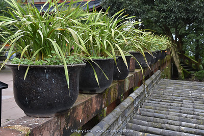 every where plants in pots on Emei Shan
