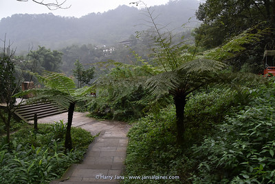 tree ferns in a small garden on Emei Shan