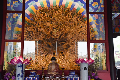 Da Fo Buddhist Temple (tree trunck)