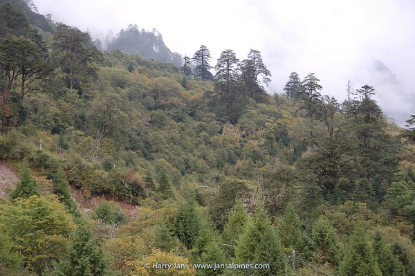 forest on Xuemenkeng pass, 3200-3830m