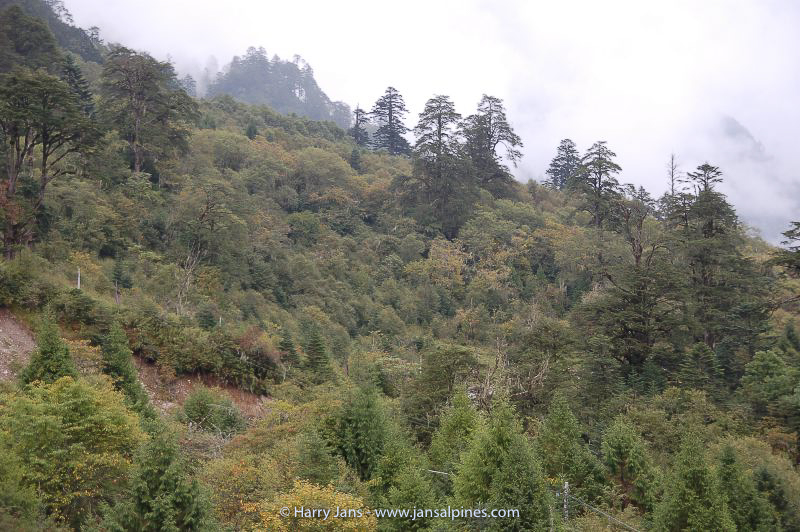 forest on Xuemenkeng pass, 3200-3830m