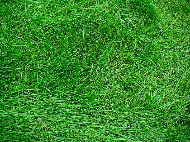 Grass, Cheng Du, China