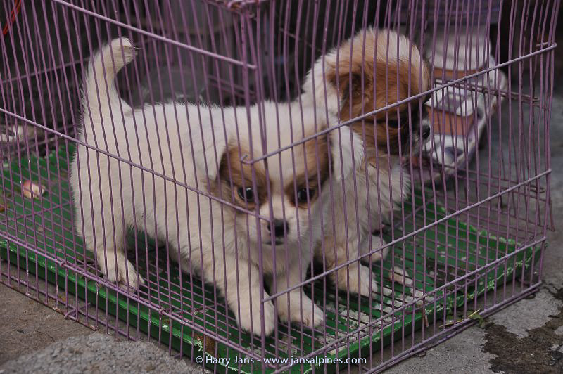 dogs for sale