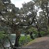 trees with mosses at Wuxuhai Lake