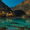 Sichuan,  Jiuzhaigou, Five Flower Lake, 2465m