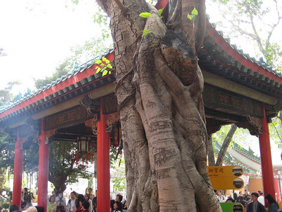 temple_tree