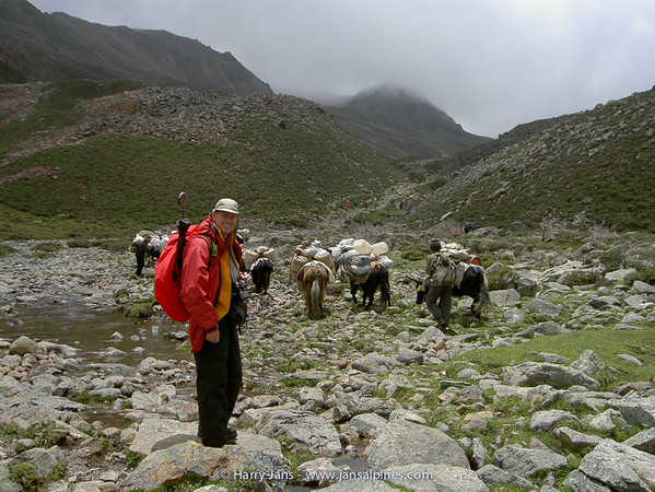 Harry with yaks during Kangshung Trek (4650m)