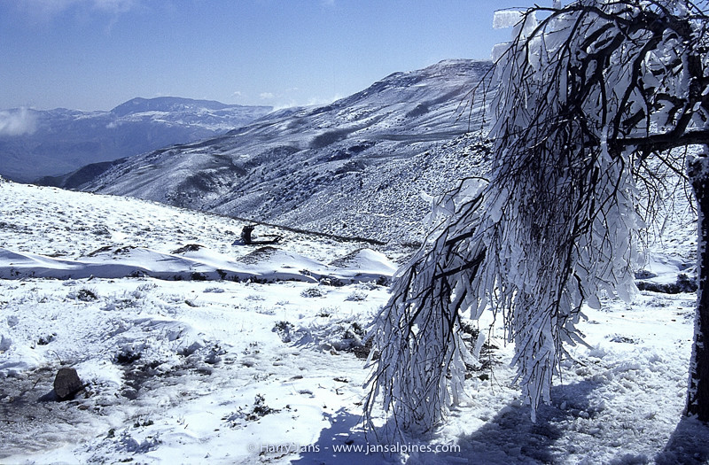 fresh snow in Golestan mountains, 2250m