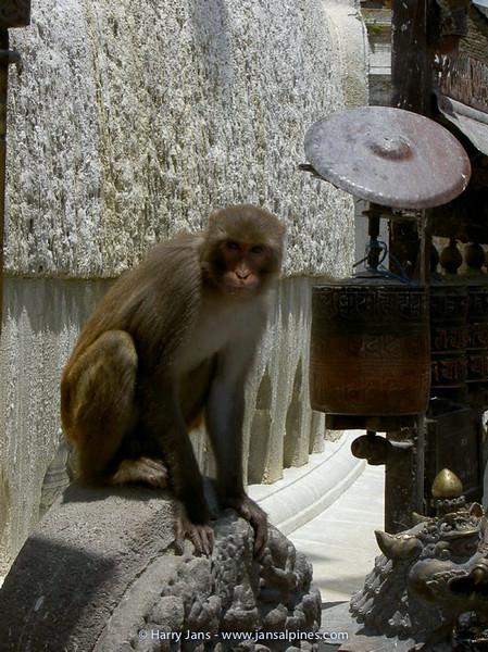 Swayambunath Stupa (Monkey Temple)