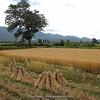 field near Lijiang