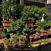 """Bird & Flower Market Kunming"""