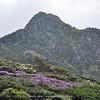 Rhododendron  at Cang Shan