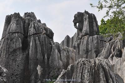 Stone Forest (Elephant)