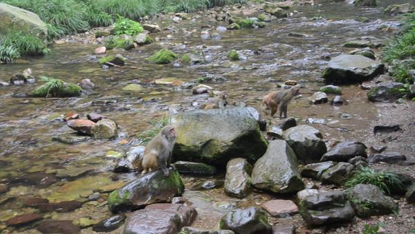 Zhangjiajie National Park - Jinbian Xi