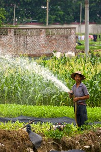 A farmer in Foshan watering crops
