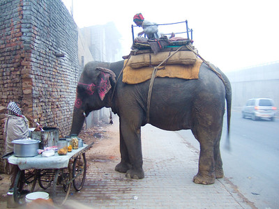 Soon after leaving Delhi was came across this roadside elephant trying to get some coffee
