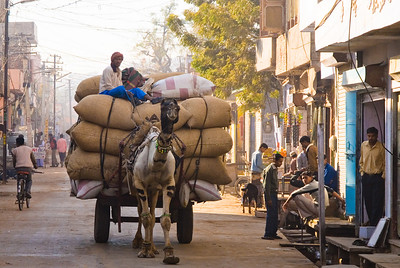 Camel Truck