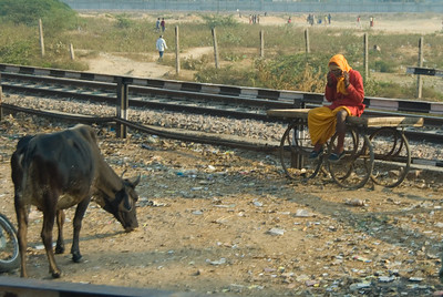 Typical roadside scene on the way to Fatehpur Sikri
