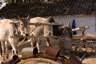 We were greeted with a scene that has changed little in several thousand years. A two bullpower engine driving a wheel