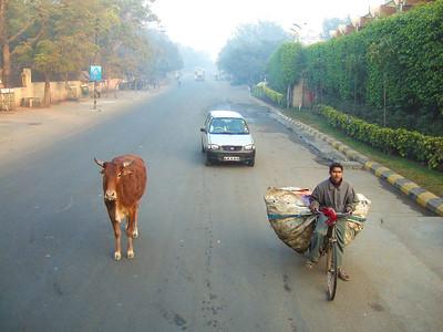 Classic Delhi scene