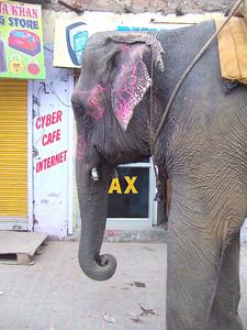 Roadside elephant tries to get online