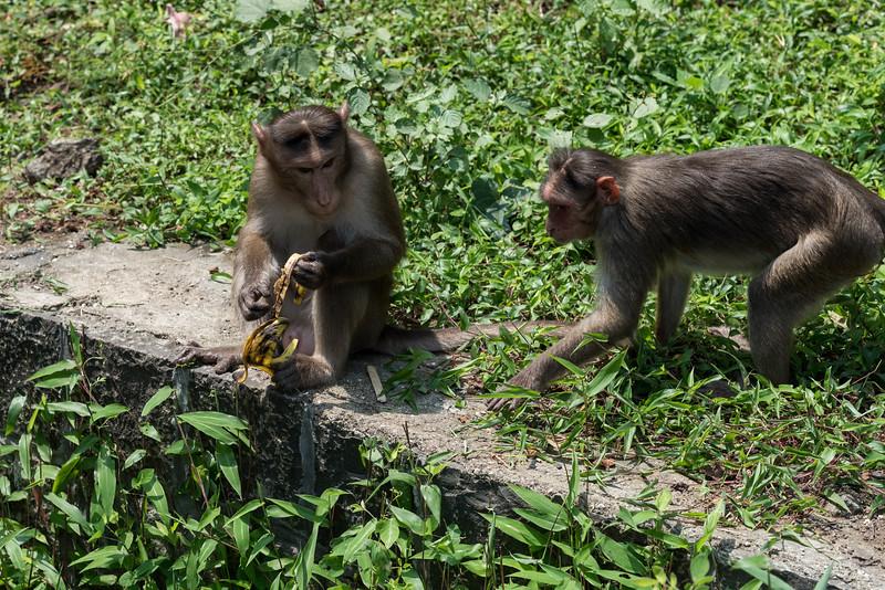 Elephanta Island Monkeys