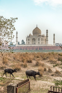 20190102 - pkp - Agra and The Taj Mahal, India - 41