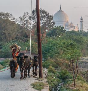 Taj Mahal from a local village