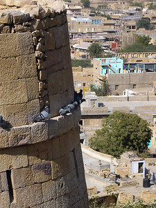 Fort Pigeons