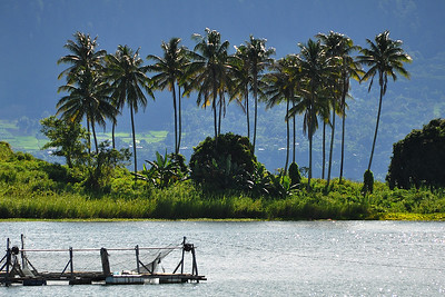 Lake Toba - Palm Trees