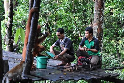 Bukit Lawang - Leuser Platform Feeding