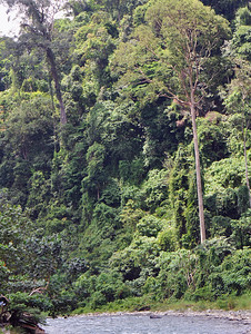 Bukit Lawang - Jungle View