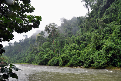 Bukit Lawang - Damp Rainforest along the Bahorok river