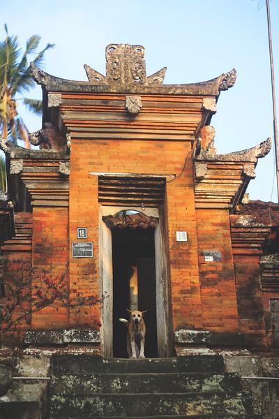 Several street dogs find refuge in the temples. October 2015