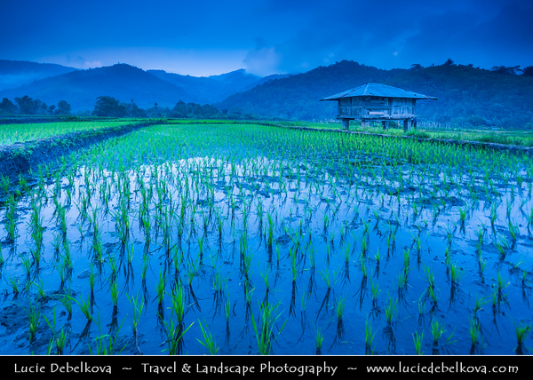 Indonesia - Flores Island - Moni Village - Traditional Rice Fields during late evening