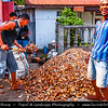 Indonesia - Flores Island - Maumere - Maumere is the largest town in Flores and is a port in the north of the region - Traditional Market - Coconut store
