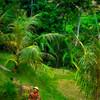 Bali Farmer #2 - Ubud, Bali, Indonesia