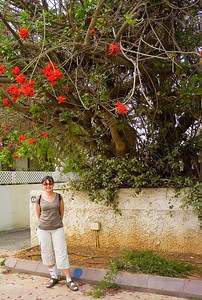 We took a walk to Appolonia - just north of Herzliya beach. Hilda liked this colorful tree