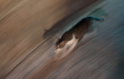 On the weay to dinner - a cat ran by