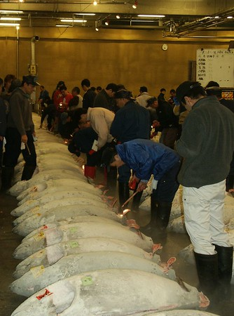 1) Inspect maguro (tuna), could weight up to 600 lbs.