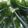 Bamboo Forest, Arashiyama, Kyoto