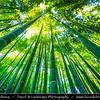 Japan - Honshu Island - Kanagawa Prefecture - Kamakura - 鎌倉市 - Kamakura-shi - Hokoku-ji Temple - 報国寺 - Take-dera - Bamboo Temple - Unique temple with 2000 thick and fine moso bamboos in bamboo grove behind the main hall