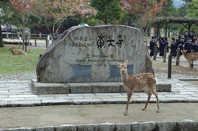 Nara Todaiji Temple 07.jpg